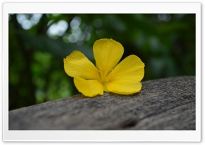 Flower on the Timber HD Wide Wallpaper for Widescreen