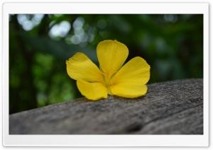 Flower on the Timber Ultra HD Wallpaper for 4K UHD Widescreen desktop, tablet & smartphone