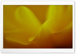 Flower Petals HD Wide Wallpaper for Widescreen