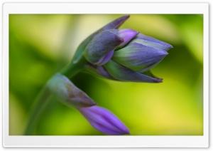 Flower Petals Macro Yellow Background HD Wide Wallpaper for Widescreen