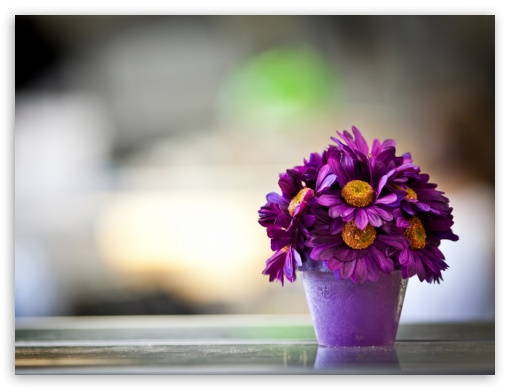 Funny Purple Flowers Hd Wallpaper: Flower Pot Purple Petals 4K HD Desktop Wallpaper For