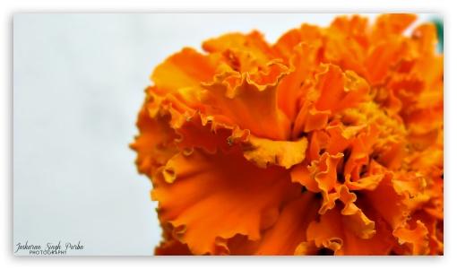 Flower Shot HD wallpaper for HD 16:9 High Definition WQHD QWXGA 1080p 900p 720p QHD nHD ;