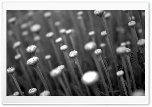Flower Stems HD Wide Wallpaper for Widescreen