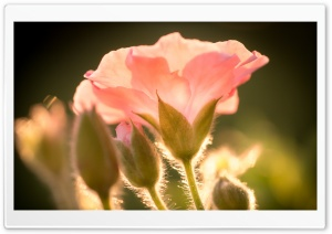 Flower, Sunshine HD Wide Wallpaper for Widescreen