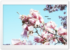 Flower Tree HD Wide Wallpaper for Widescreen
