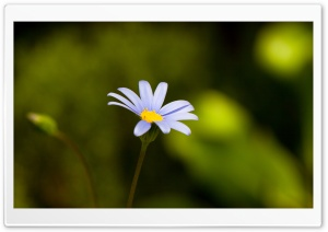 Flower With Blue Petals HD Wide Wallpaper for Widescreen