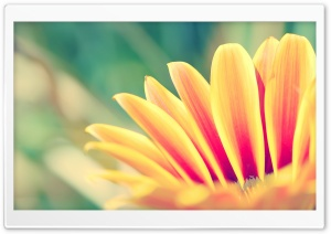 Flower With Orange Petals HD Wide Wallpaper for Widescreen