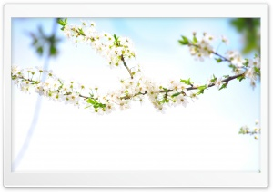 Flowering HD Wide Wallpaper for Widescreen