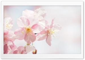 Flowering Ultra HD Wallpaper for 4K UHD Widescreen desktop, tablet & smartphone