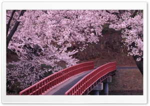 Flowering trees bridge river spring flower HD Wide Wallpaper for 4K UHD Widescreen desktop & smartphone