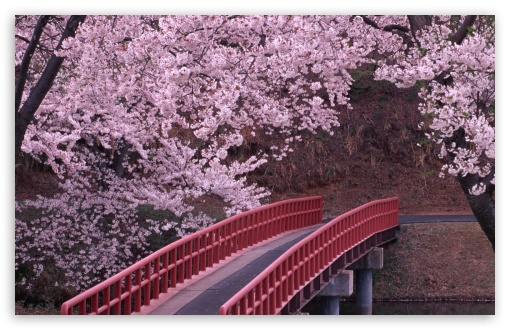 Flowering trees bridge river spring flower ❤ 4K UHD Wallpaper for Wide 16:10 5:3 Widescreen WHXGA WQXGA WUXGA WXGA WGA ; 4K UHD 16:9 Ultra High Definition 2160p 1440p 1080p 900p 720p ; Standard 4:3 5:4 3:2 Fullscreen UXGA XGA SVGA QSXGA SXGA DVGA HVGA HQVGA ( Apple PowerBook G4 iPhone 4 3G 3GS iPod Touch ) ; Smartphone 16:9 3:2 5:3 2160p 1440p 1080p 900p 720p DVGA HVGA HQVGA ( Apple PowerBook G4 iPhone 4 3G 3GS iPod Touch ) WGA ; Tablet 1:1 ; iPad 1/2/Mini ; Mobile 4:3 5:3 3:2 16:9 5:4 - UXGA XGA SVGA WGA DVGA HVGA HQVGA ( Apple PowerBook G4 iPhone 4 3G 3GS iPod Touch ) 2160p 1440p 1080p 900p 720p QSXGA SXGA ;
