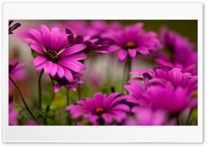 Flowers Ultra HD Wallpaper for 4K UHD Widescreen desktop, tablet & smartphone