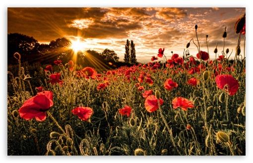 Download Flowers HD Wallpaper