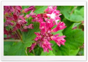 Flowers HD Wide Wallpaper for Widescreen