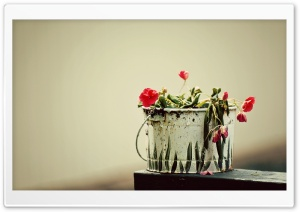 Flowers - Paint Bucket HD Wide Wallpaper for Widescreen