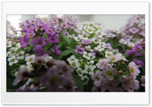 Flowers - Peyman Jari Ultra HD Wallpaper for 4K UHD Widescreen desktop, tablet & smartphone