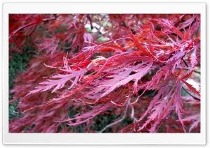 Flowers & Tree HD Wide Wallpaper for 4K UHD Widescreen desktop & smartphone