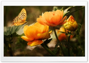 Flowers and a Butterfly HD Wide Wallpaper for Widescreen