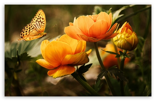 Flowers and a Butterfly ❤ 4K UHD Wallpaper for Wide 16:10 5:3 Widescreen WHXGA WQXGA WUXGA WXGA WGA ; 4K UHD 16:9 Ultra High Definition 2160p 1440p 1080p 900p 720p ; Standard 4:3 5:4 3:2 Fullscreen UXGA XGA SVGA QSXGA SXGA DVGA HVGA HQVGA ( Apple PowerBook G4 iPhone 4 3G 3GS iPod Touch ) ; Smartphone 5:3 WGA ; Tablet 1:1 ; iPad 1/2/Mini ; Mobile 4:3 5:3 3:2 16:9 5:4 - UXGA XGA SVGA WGA DVGA HVGA HQVGA ( Apple PowerBook G4 iPhone 4 3G 3GS iPod Touch ) 2160p 1440p 1080p 900p 720p QSXGA SXGA ;