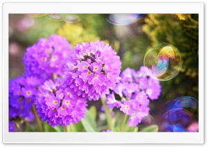 Flowers and Soap Bubbles HD Wide Wallpaper for 4K UHD Widescreen desktop & smartphone