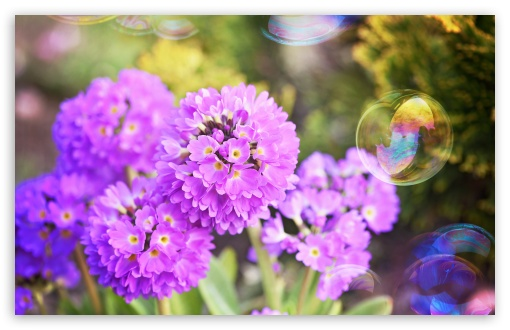 Flowers and Soap Bubbles ❤ 4K UHD Wallpaper for Wide 16:10 5:3 Widescreen WHXGA WQXGA WUXGA WXGA WGA ; 4K UHD 16:9 Ultra High Definition 2160p 1440p 1080p 900p 720p ; UHD 16:9 2160p 1440p 1080p 900p 720p ; Standard 4:3 5:4 3:2 Fullscreen UXGA XGA SVGA QSXGA SXGA DVGA HVGA HQVGA ( Apple PowerBook G4 iPhone 4 3G 3GS iPod Touch ) ; Smartphone 5:3 WGA ; Tablet 1:1 ; iPad 1/2/Mini ; Mobile 4:3 5:3 3:2 16:9 5:4 - UXGA XGA SVGA WGA DVGA HVGA HQVGA ( Apple PowerBook G4 iPhone 4 3G 3GS iPod Touch ) 2160p 1440p 1080p 900p 720p QSXGA SXGA ;