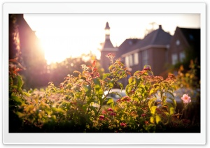 Flowers And Sunset HD Wide Wallpaper for Widescreen
