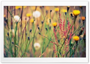 Flowers And Weeds HD Wide Wallpaper for Widescreen