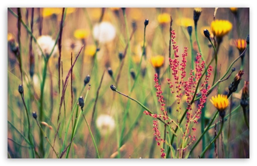 Flowers And Weeds HD wallpaper for Wide 16:10 5:3 Widescreen WHXGA WQXGA WUXGA WXGA WGA ; HD 16:9 High Definition WQHD QWXGA 1080p 900p 720p QHD nHD ; Standard 4:3 5:4 3:2 Fullscreen UXGA XGA SVGA QSXGA SXGA DVGA HVGA HQVGA devices ( Apple PowerBook G4 iPhone 4 3G 3GS iPod Touch ) ; Tablet 1:1 ; iPad 1/2/Mini ; Mobile 4:3 5:3 3:2 16:9 5:4 - UXGA XGA SVGA WGA DVGA HVGA HQVGA devices ( Apple PowerBook G4 iPhone 4 3G 3GS iPod Touch ) WQHD QWXGA 1080p 900p 720p QHD nHD QSXGA SXGA ; Dual 5:4 QSXGA SXGA ;