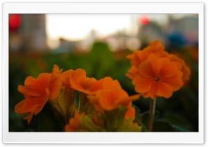 Flowers At Blackfriars HD Wide Wallpaper for 4K UHD Widescreen desktop & smartphone