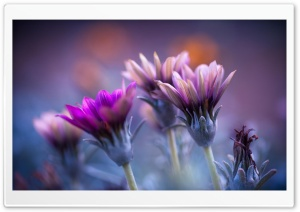 Flowers Blurred Background HD Wide Wallpaper for Widescreen