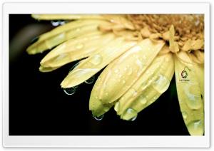 Flowers for Beautiful People in World Ultra HD Wallpaper for 4K UHD Widescreen desktop, tablet & smartphone