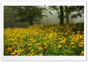 Flowers In Foreground HD Wide Wallpaper for Widescreen