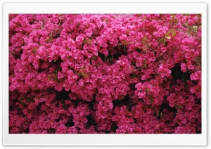 Flowers In Front Of House HD Wide Wallpaper for Widescreen