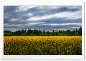 Flowers in the Field, New Zealand HD Wide Wallpaper for Widescreen