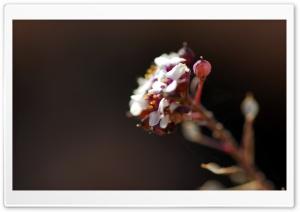 Flowers Macro HD Wide Wallpaper for Widescreen