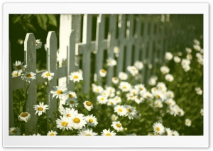 Flowers Near Fence HD Wide Wallpaper for 4K UHD Widescreen desktop & smartphone
