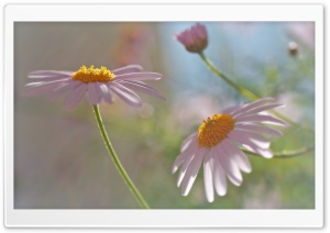 Flowers Outdoors Ultra HD Wallpaper for 4K UHD Widescreen desktop, tablet & smartphone