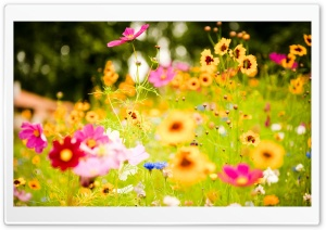 Flowers, Soustons, France HD Wide Wallpaper for Widescreen