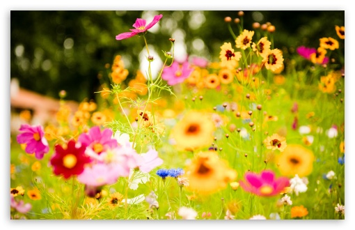 Flowers, Soustons, France HD wallpaper for Standard 4:3 5:4 Fullscreen UXGA XGA SVGA QSXGA SXGA ; Wide 16:10 5:3 Widescreen WHXGA WQXGA WUXGA WXGA WGA ; HD 16:9 High Definition WQHD QWXGA 1080p 900p 720p QHD nHD ; Other 3:2 DVGA HVGA HQVGA devices ( Apple PowerBook G4 iPhone 4 3G 3GS iPod Touch ) ; Mobile VGA WVGA iPhone iPad PSP Phone - VGA QVGA Smartphone ( PocketPC GPS iPod Zune BlackBerry HTC Samsung LG Nokia Eten Asus ) WVGA WQVGA Smartphone ( HTC Samsung Sony Ericsson LG Vertu MIO ) HVGA Smartphone ( Apple iPhone iPod BlackBerry HTC Samsung Nokia ) Sony PSP Zune HD Zen ; Tablet 2 Android 3 DVGA HVGA HQVGA devices ( Apple PowerBook G4 iPhone 4 3G 3GS iPod Touch ) ; Dual 4:3 5:4 16:10 5:3 16:9 UXGA XGA SVGA QSXGA SXGA WHXGA WQXGA WUXGA WXGA WGA WQHD QWXGA 1080p 900p 720p QHD nHD ;