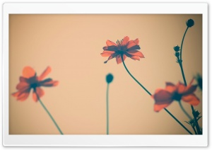 Flowers Tumblr HD Wide Wallpaper for Widescreen