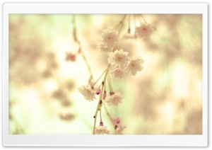 Flowers Twig HD Wide Wallpaper for Widescreen