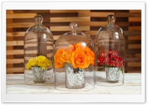 Flowers Under Glass Cloches HD Wide Wallpaper for Widescreen