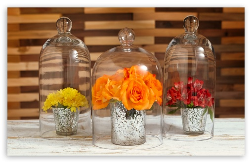 Flowers Under Glass Cloches ❤ 4K UHD Wallpaper for Wide 16:10 5:3 Widescreen WHXGA WQXGA WUXGA WXGA WGA ; 4K UHD 16:9 Ultra High Definition 2160p 1440p 1080p 900p 720p ; Standard 4:3 5:4 3:2 Fullscreen UXGA XGA SVGA QSXGA SXGA DVGA HVGA HQVGA ( Apple PowerBook G4 iPhone 4 3G 3GS iPod Touch ) ; iPad 1/2/Mini ; Mobile 4:3 5:3 3:2 16:9 5:4 - UXGA XGA SVGA WGA DVGA HVGA HQVGA ( Apple PowerBook G4 iPhone 4 3G 3GS iPod Touch ) 2160p 1440p 1080p 900p 720p QSXGA SXGA ;