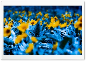 Flowers With Blue Leaves HD Wide Wallpaper for Widescreen
