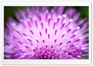 Fluffy Flower Macro HD Wide Wallpaper for Widescreen