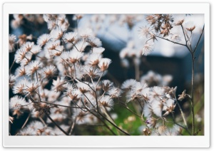 Fluffy Flowers HD Wide Wallpaper for Widescreen