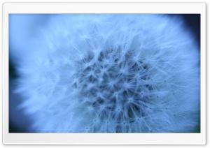 Fluffy Head, Blue Ultra HD Wallpaper for 4K UHD Widescreen desktop, tablet & smartphone
