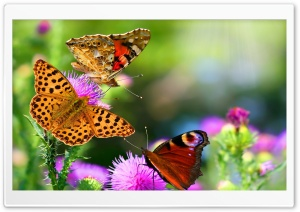 Fluttering Butterflies HD Wide Wallpaper for Widescreen