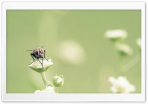 Fly Macro HD Wide Wallpaper for Widescreen