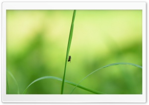 Fly On A Blade Of Grass HD Wide Wallpaper for Widescreen